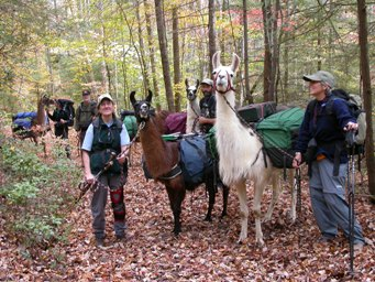 PLTA working llamas at a Pack Trail